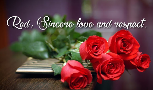 Happy Rose Day I Love You Images and Photos